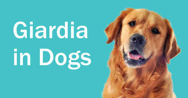 Treating Giardia And Coccidia In Dogs