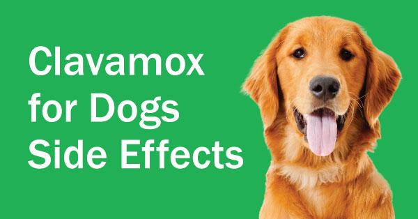 Viagra For Dogs
