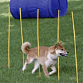 Dog Agility Kit
