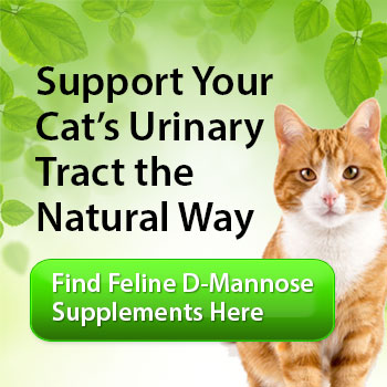 FLUTD: Feline Lower Urinary Tract Disease - Cat Renal and