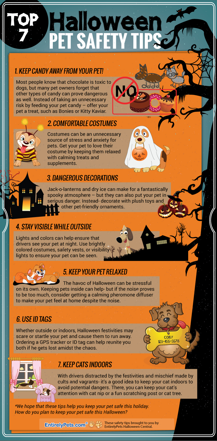 Top 7 Halloween Pet Safety Tips Tipsographic