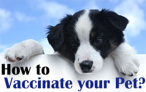 How to Vaccinate your pet