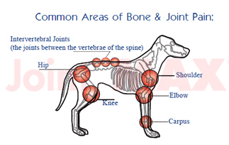 Common Areas of Bone & Joint Pain