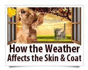 how the weather affects the skin and coat