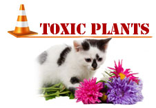 Watch for these plants, as they may be harmful to cats