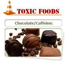 Chocolate and caffine is bad for cats