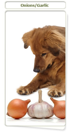 Garlic and onions contain toxic elements for dogs