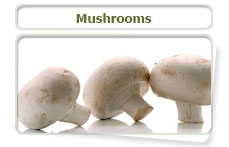 Mushrooms can contain toxins which may be harmful to cats