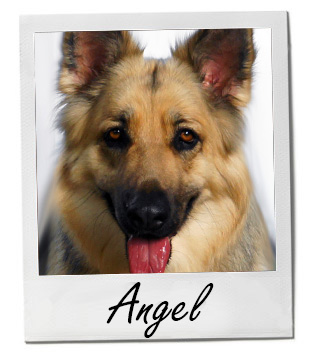 Pet of the Week photo Angel