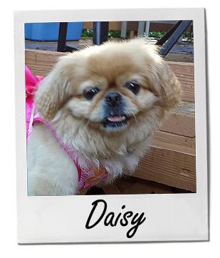 Pet of the Week photo Daisy