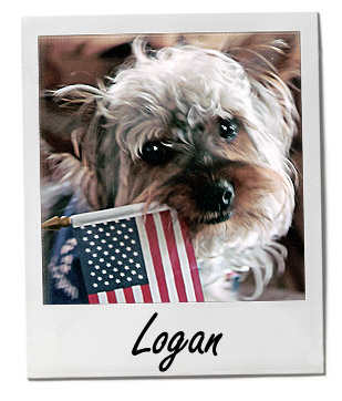 Pet of the Week photo Logan