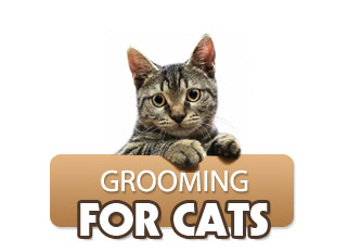Grooming for Cats